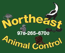 Northeast Animal Control